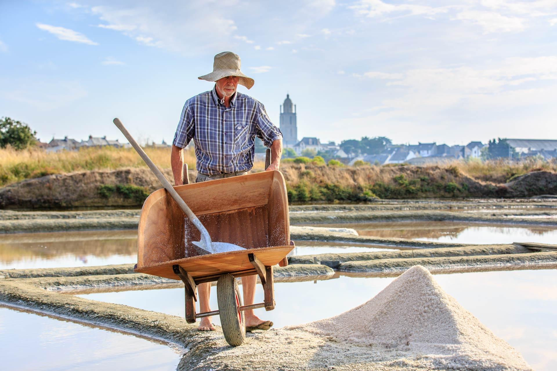 paludier jc nicole portage de la recolte du sel 2017 - Sel et Fleur de Sel de Guérande IGP
